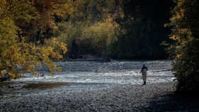 Stalking Some Trout