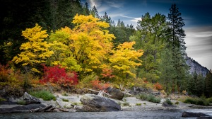 Wenatchee River Gold