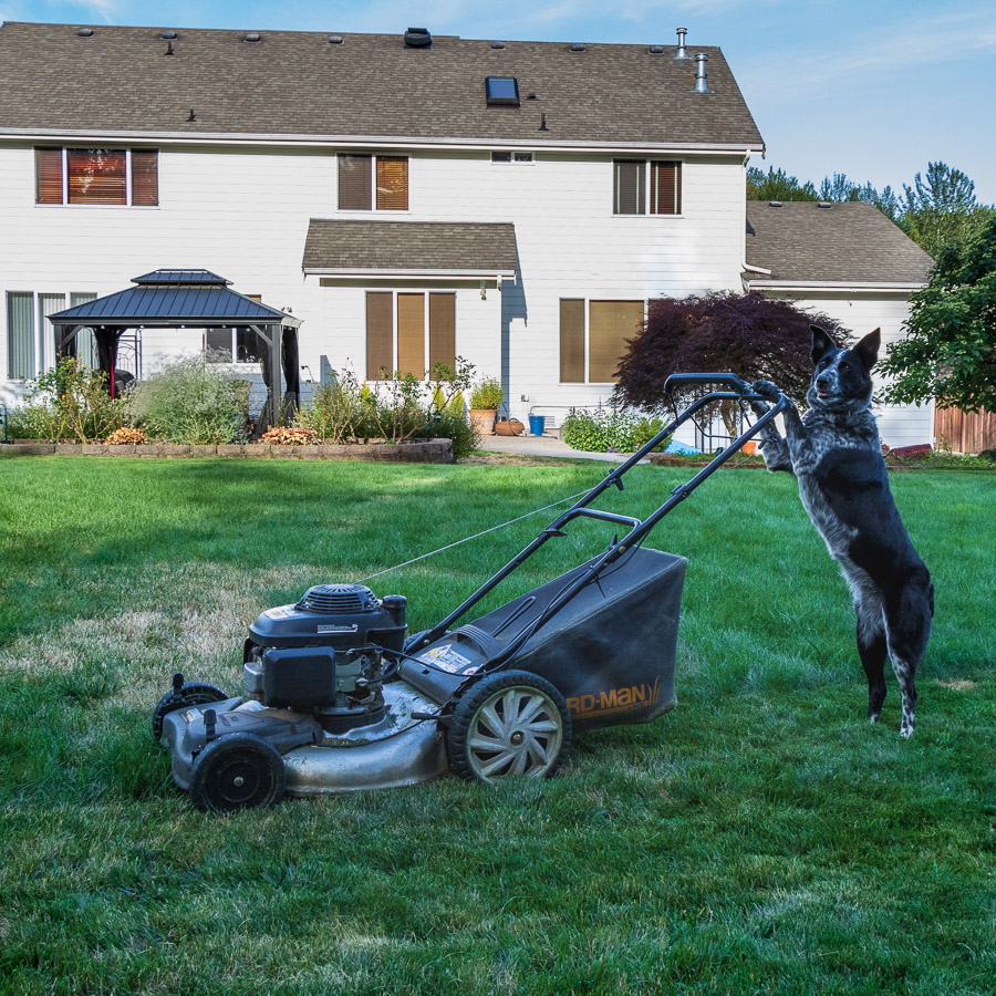Had to Mow the Lawn Today