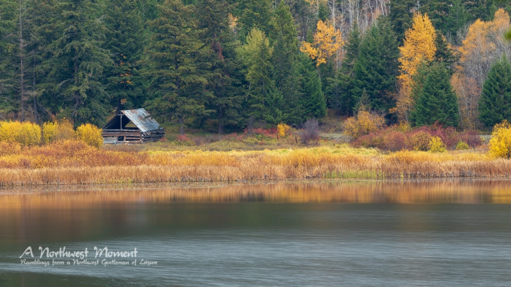 An abandoned log structure sits back from Thynne Lake on an autumn day.