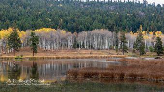 Golden Aspens reflect on a pond along Otter Creek near Aspen Grove, BC.