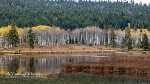 Golden Aspens reflect on a pond along Otter Creek near Aspen Grove, BC.
