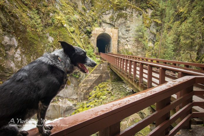 An engineering masterpiece, the Othello Tunnels cut through the mountain and bridge the Coquihalla River. Liddy was kind enough to pose on the rail above the river.