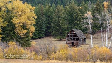 An old barn stands along Otter Creek, stripped of its siding. Aspens in autumn colors stand watch over the old structure.