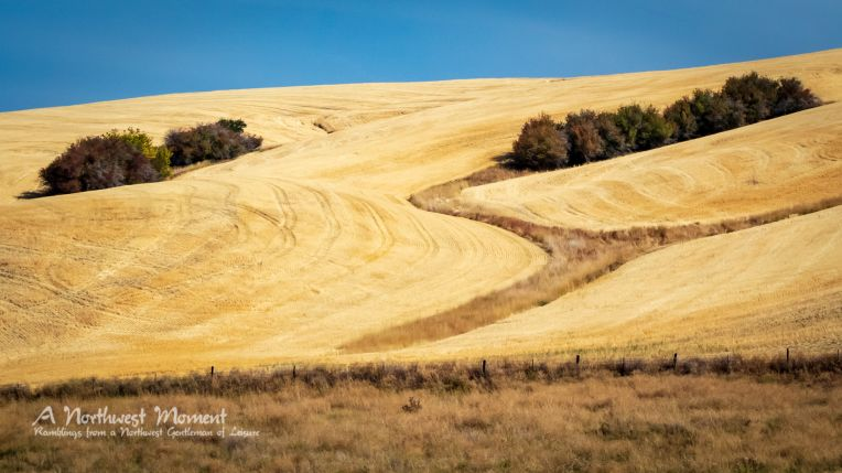 The straw has been harvested from this hill in the southern Palouse, Washington
